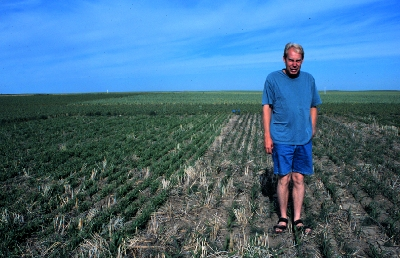 Stubble protects winter wheat